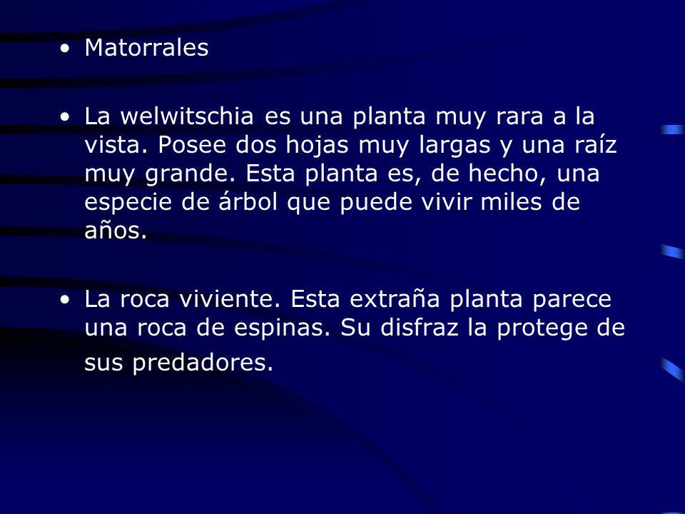 Matorrales