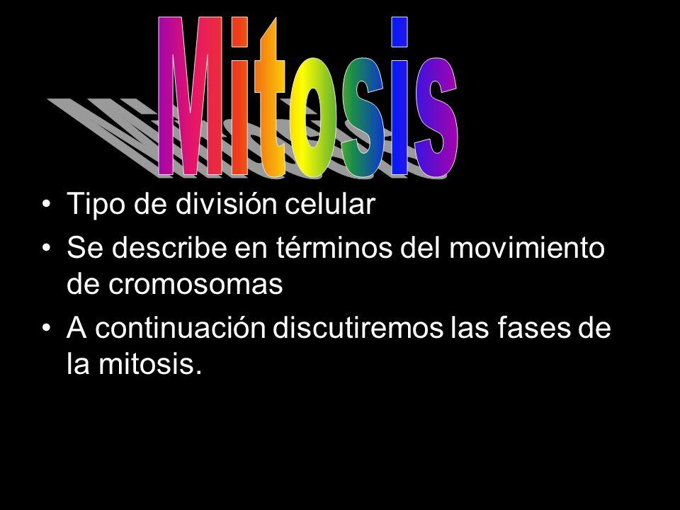 Mitosis Tipo de división celular