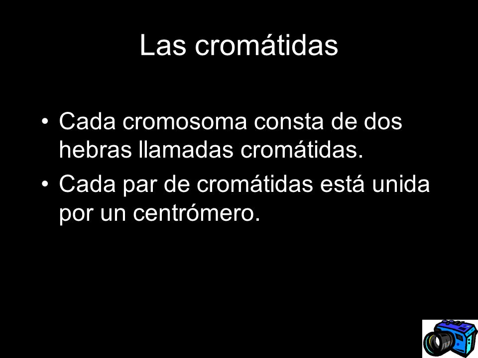Las cromátidas Cada cromosoma consta de dos hebras llamadas cromátidas.