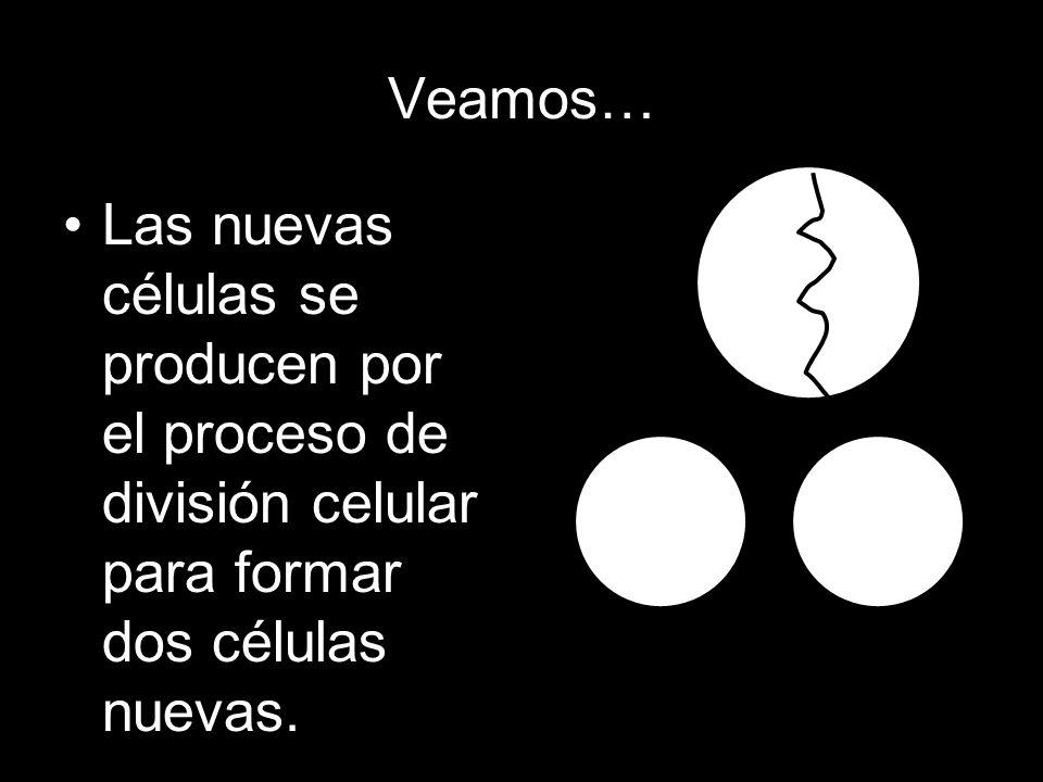 Veamos…Las nuevas células se producen por el proceso de división celular para formar dos células nuevas.