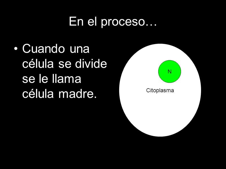 Cuando una célula se divide se le llama célula madre.