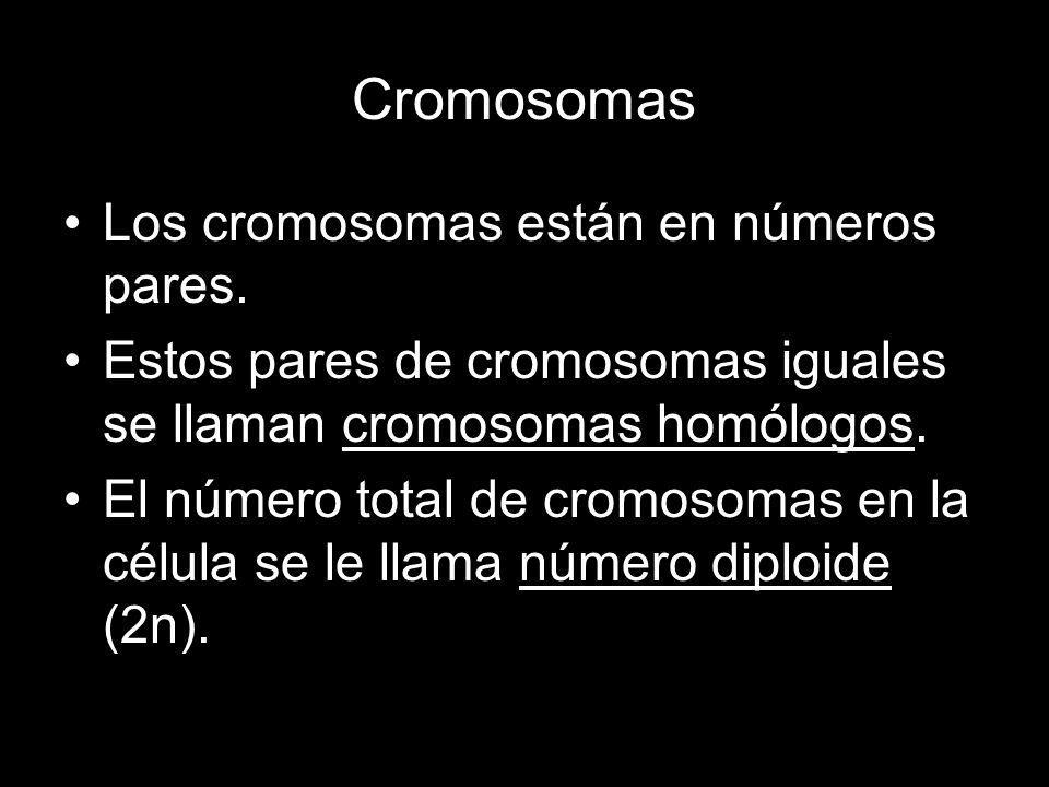 Cromosomas Los cromosomas están en números pares.