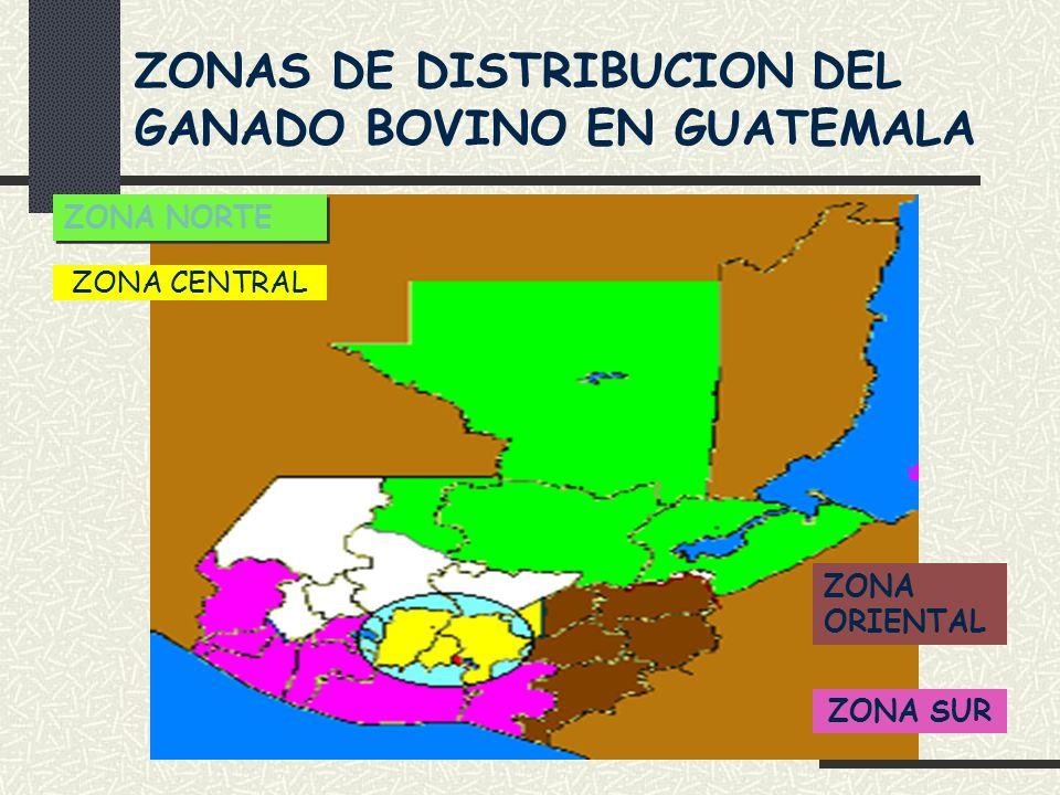 ZONAS DE DISTRIBUCION DEL GANADO BOVINO EN GUATEMALA