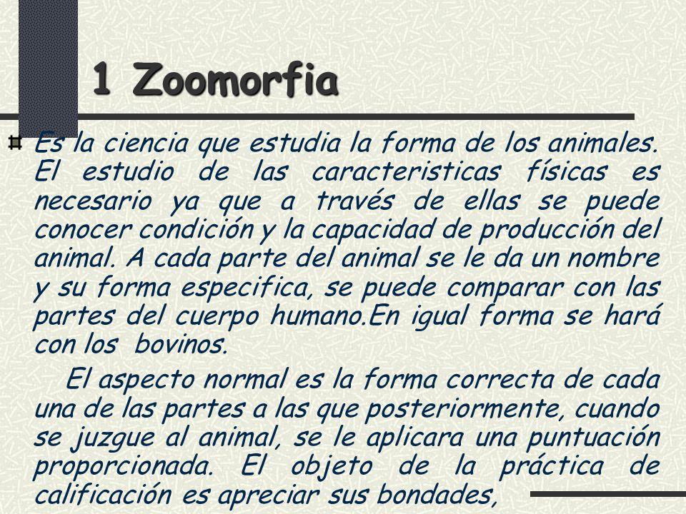 1 Zoomorfia