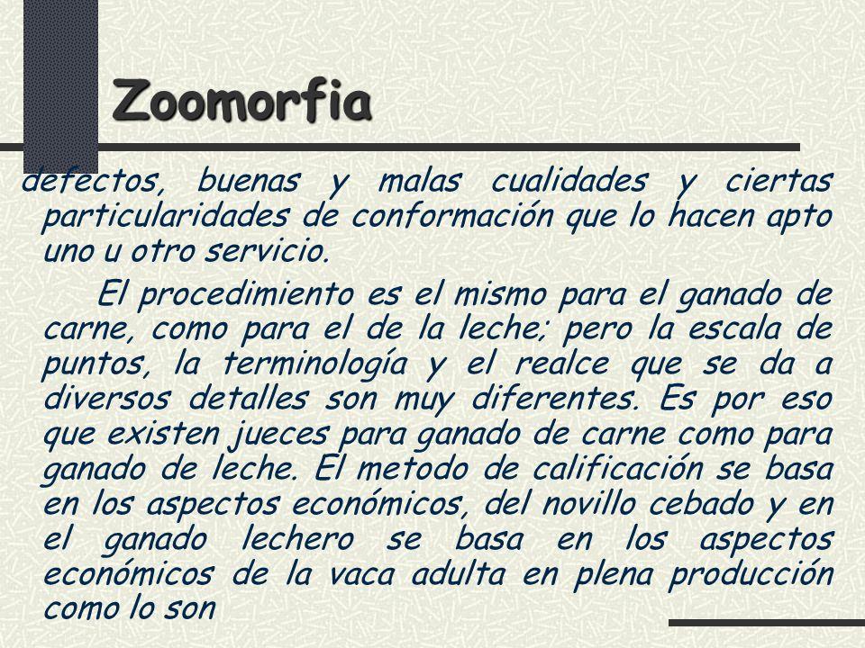 Zoomorfia defectos, buenas y malas cualidades y ciertas particularidades de conformación que lo hacen apto uno u otro servicio.