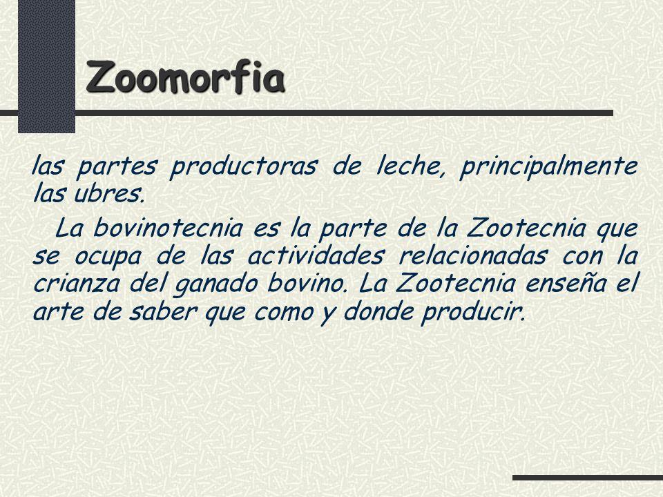 Zoomorfia las partes productoras de leche, principalmente las ubres.