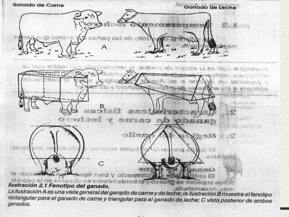 Fenotipo del ganado bovino
