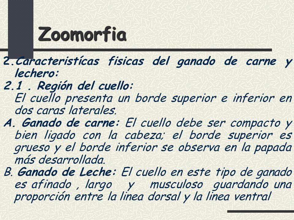 Zoomorfia 2.Caracteristícas fisicas del ganado de carne y lechero: