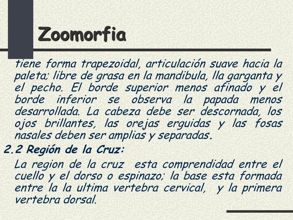 Zoomorfia