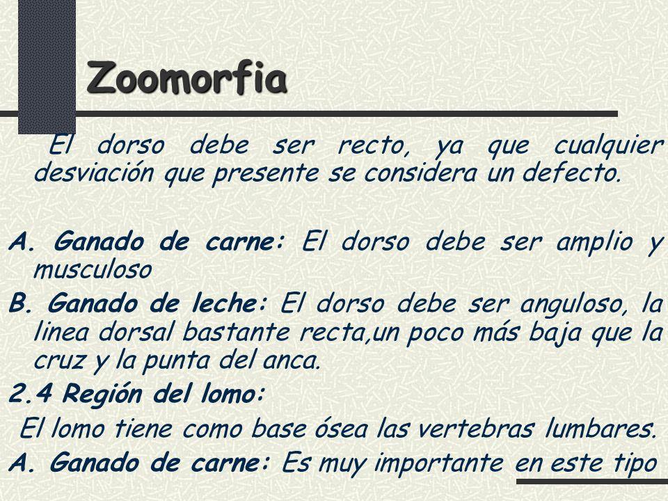 Zoomorfia El dorso debe ser recto, ya que cualquier desviación que presente se considera un defecto.