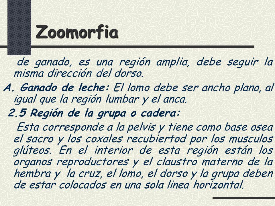 Zoomorfia de ganado, es una región amplia, debe seguir la misma dirección del dorso.
