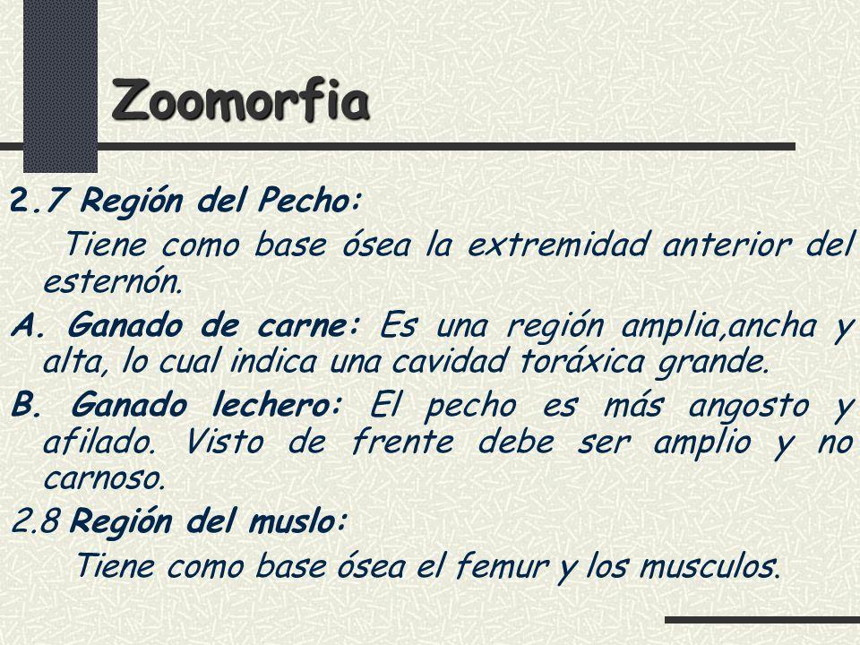 Zoomorfia 2.7 Región del Pecho: