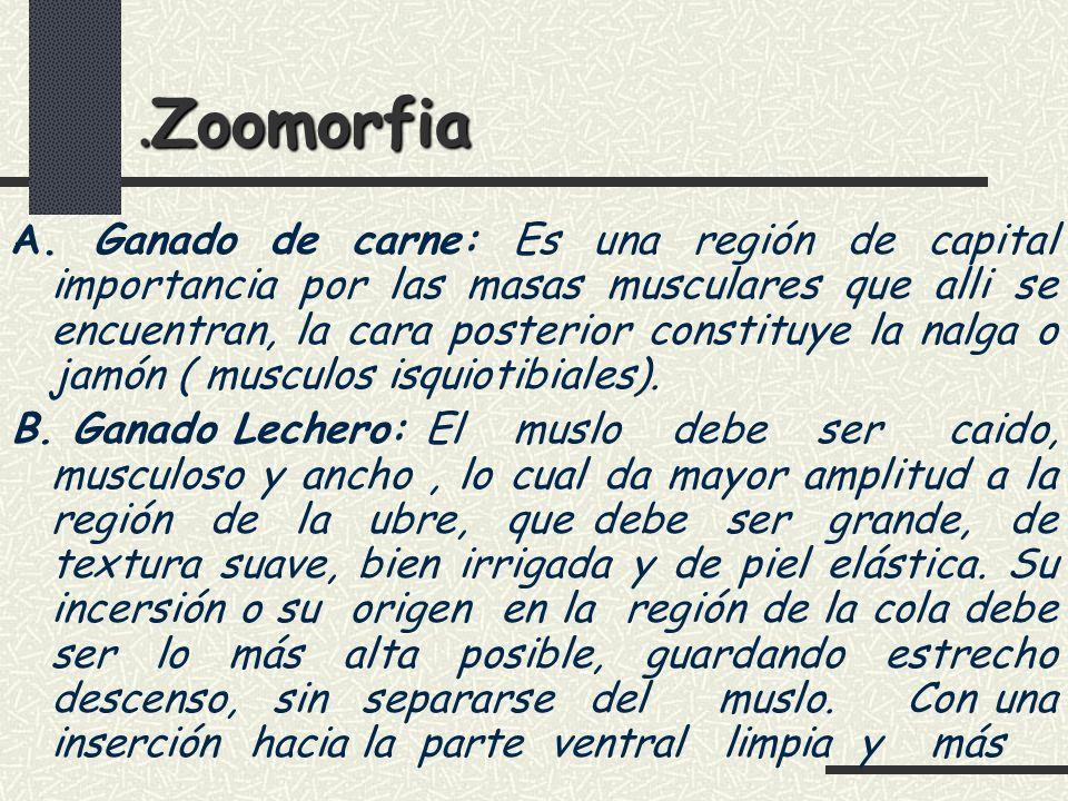 .Zoomorfia