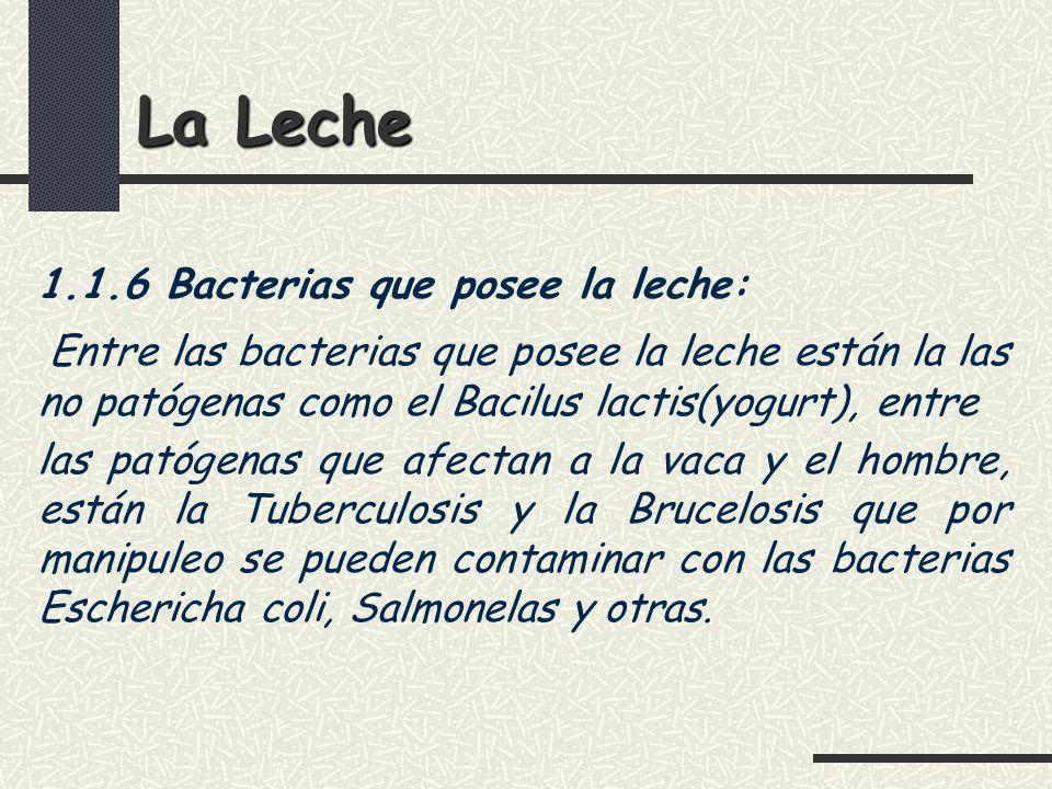 La Leche 1.1.6 Bacterias que posee la leche: Entre las bacterias que posee la leche están la las no patógenas como el Bacilus lactis(yogurt), entre.