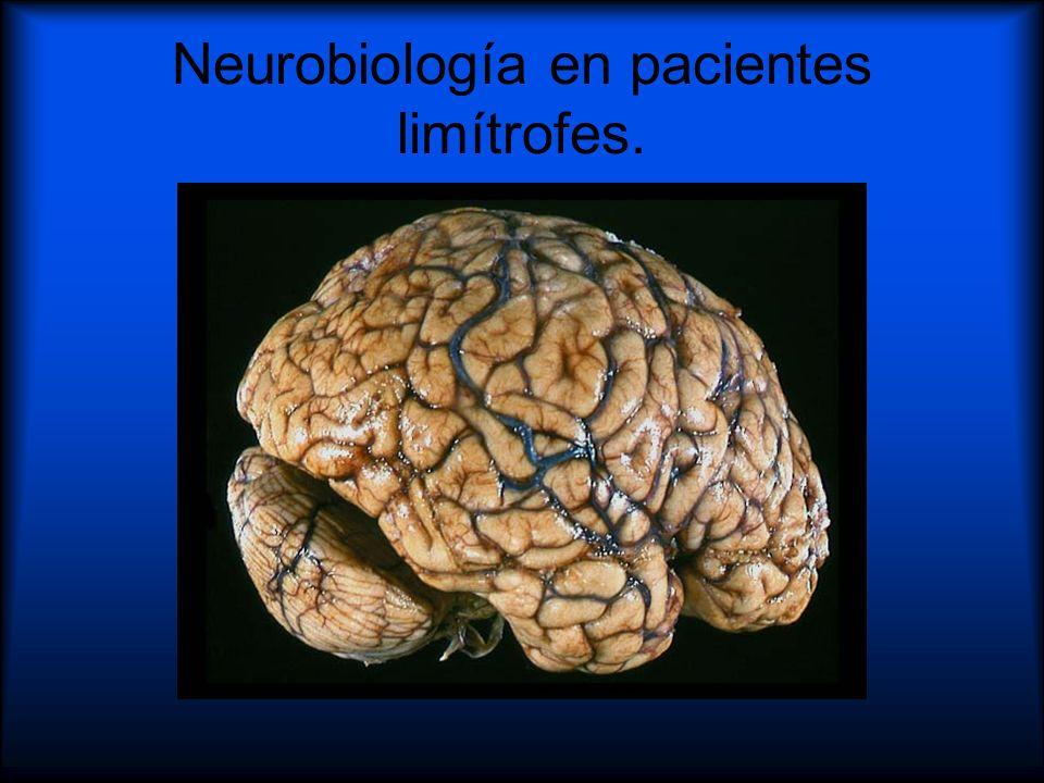 Neurobiología en pacientes limítrofes.