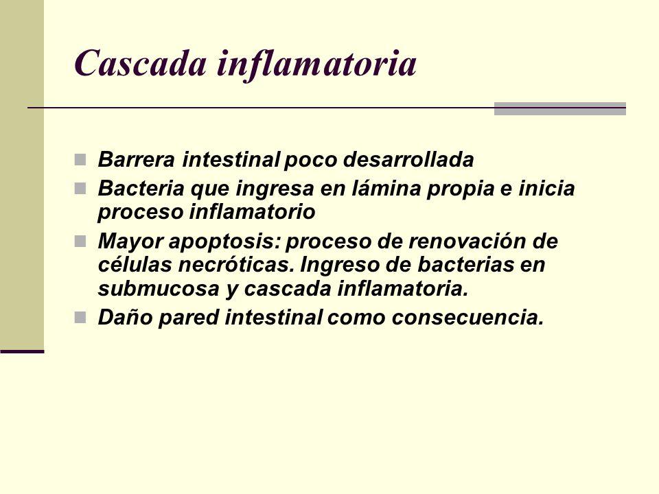 Cascada inflamatoria Barrera intestinal poco desarrollada