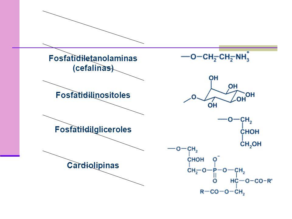 Fosfatidiletanolaminas (cefalinas)