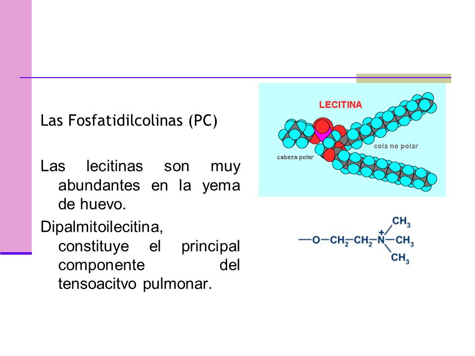 Las Fosfatidilcolinas (PC)