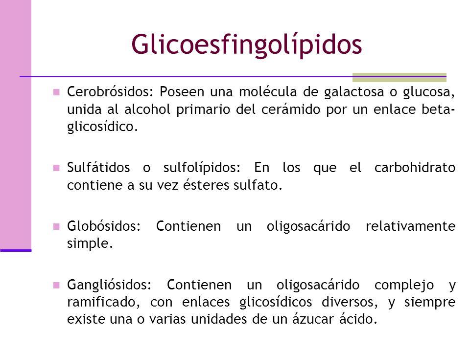 Glicoesfingolípidos Cerobrósidos: Poseen una molécula de galactosa o glucosa, unida al alcohol primario del cerámido por un enlace beta-glicosídico.