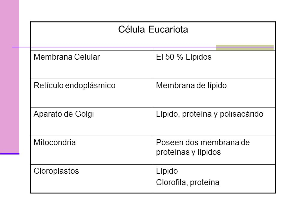 Célula Eucariota Membrana Celular El 50 % Lípidos