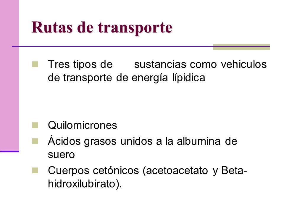 Rutas de transporte Tres tipos de sustancias como vehiculos de transporte de energía lípidica.