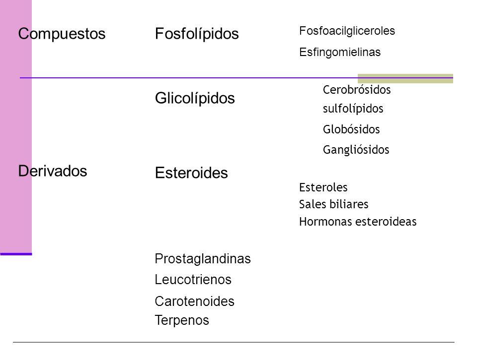 Compuestos Derivados Fosfolípidos Glicolípidos Esteroides
