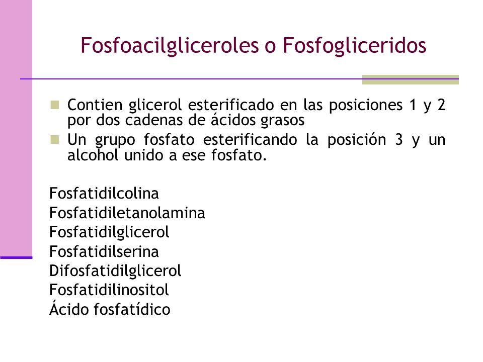 Fosfoacilgliceroles o Fosfogliceridos