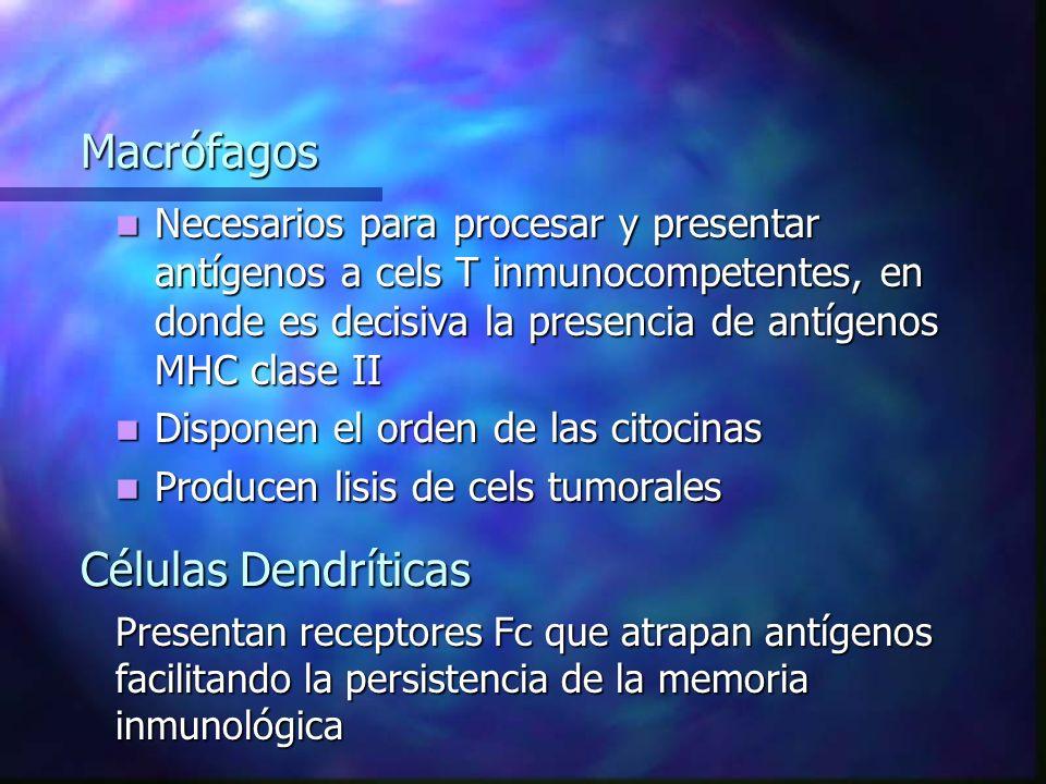 Macrófagos Células Dendríticas