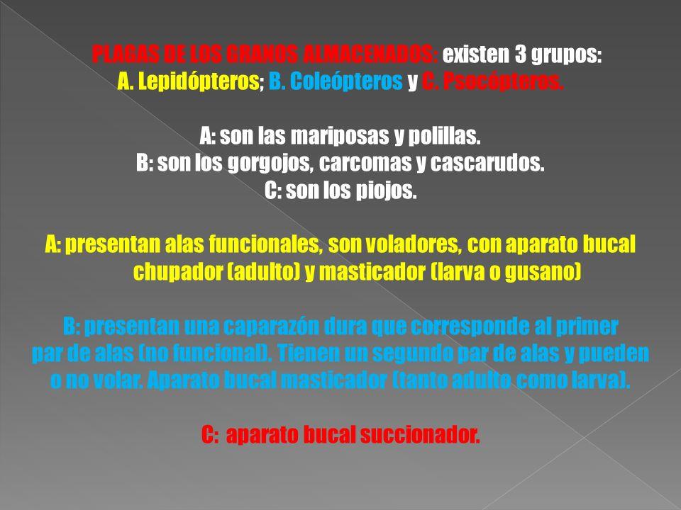 PLAGAS DE LOS GRANOS ALMACENADOS: existen 3 grupos: