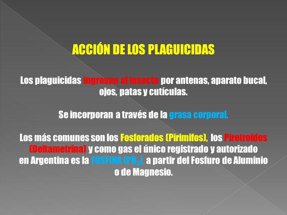 ACCIÓN DE LOS PLAGUICIDAS