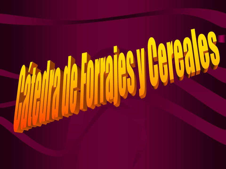 Cátedra de Forrajes y Cereales