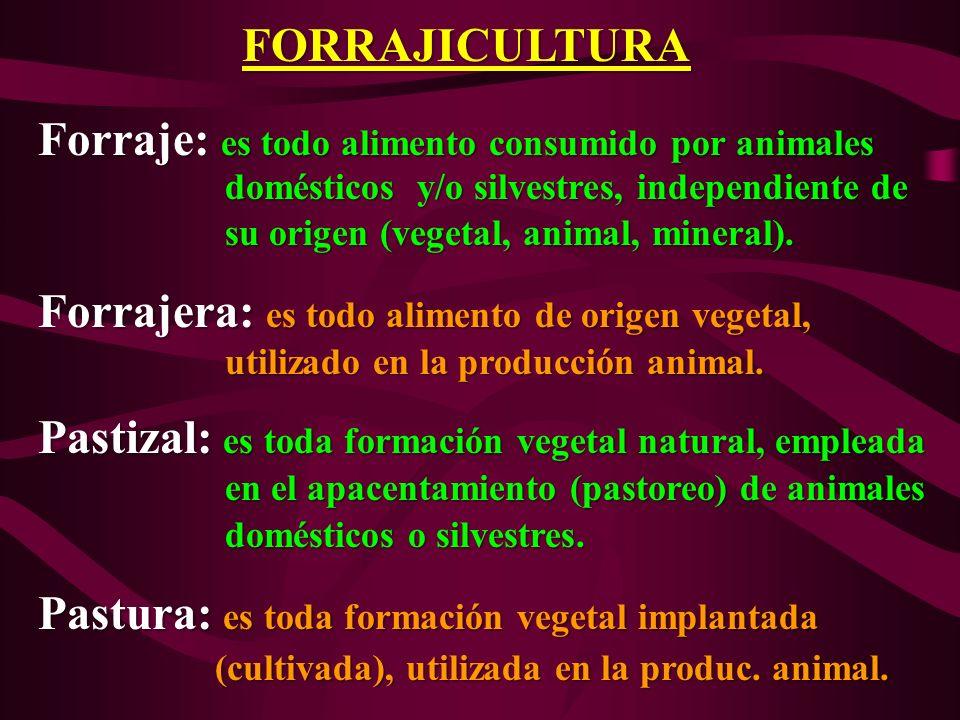 Forraje: es todo alimento consumido por animales