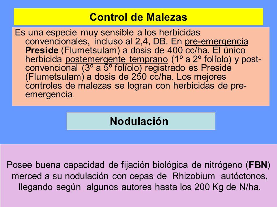 Control de Malezas Nodulación