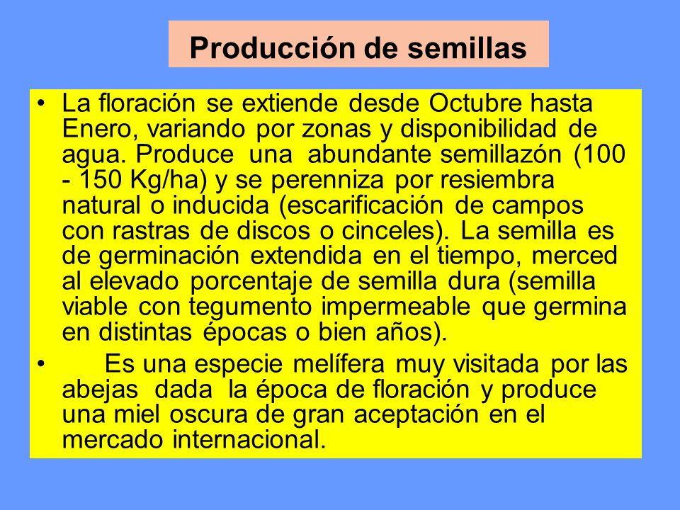 Producción de semillas