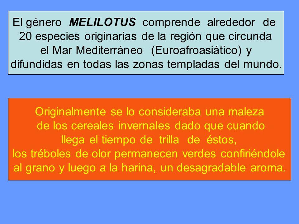 El género MELILOTUS comprende alrededor de
