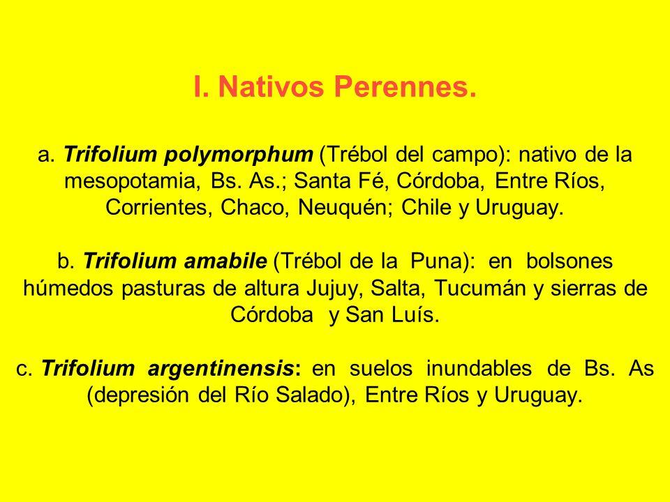 I. Nativos Perennes. a. Trifolium polymorphum (Trébol del campo): nativo de la mesopotamia, Bs.