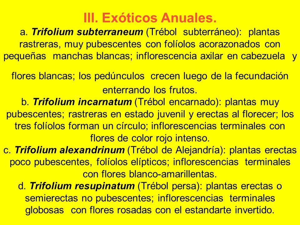 III. Exóticos Anuales. a.