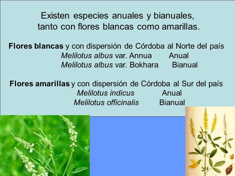 Existen especies anuales y bianuales,