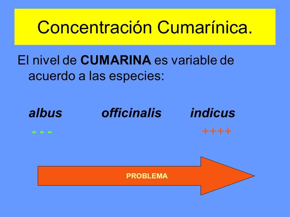 Concentración Cumarínica.