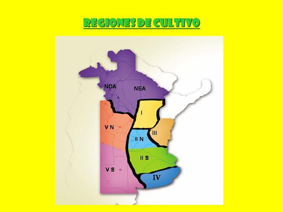 REGIONES DE CULTIVO