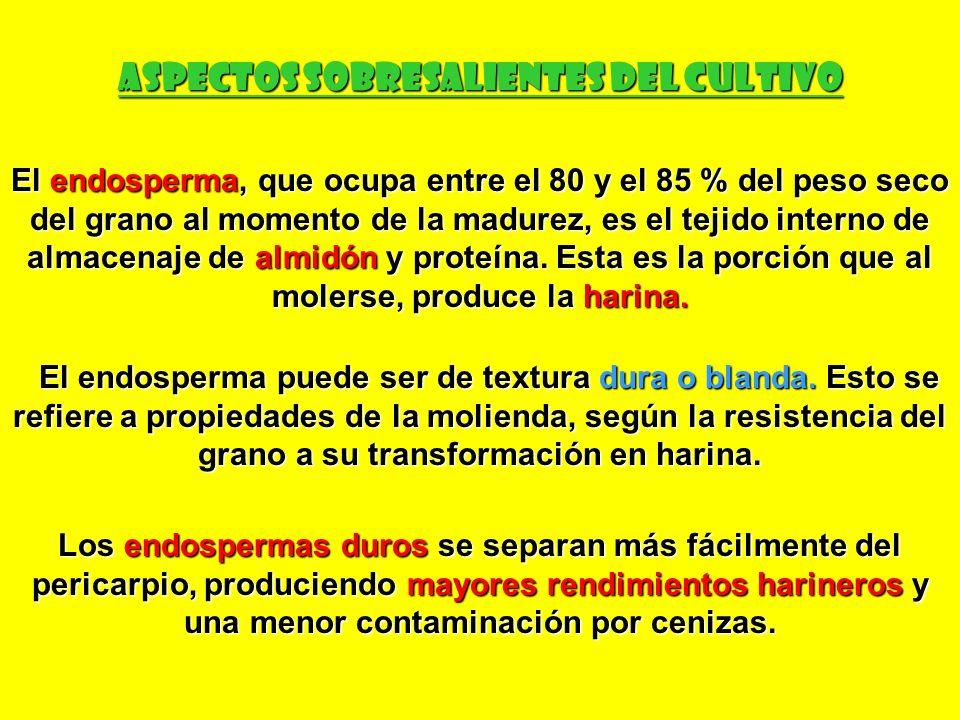 ASPECTOS SOBRESALIENTES DEL CULTIVO
