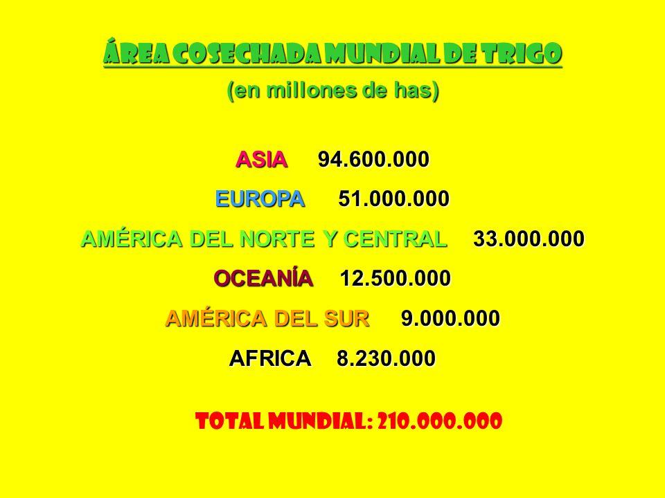 Área Cosechada Mundial de Trigo AMÉRICA DEL NORTE Y CENTRAL 33.000.000