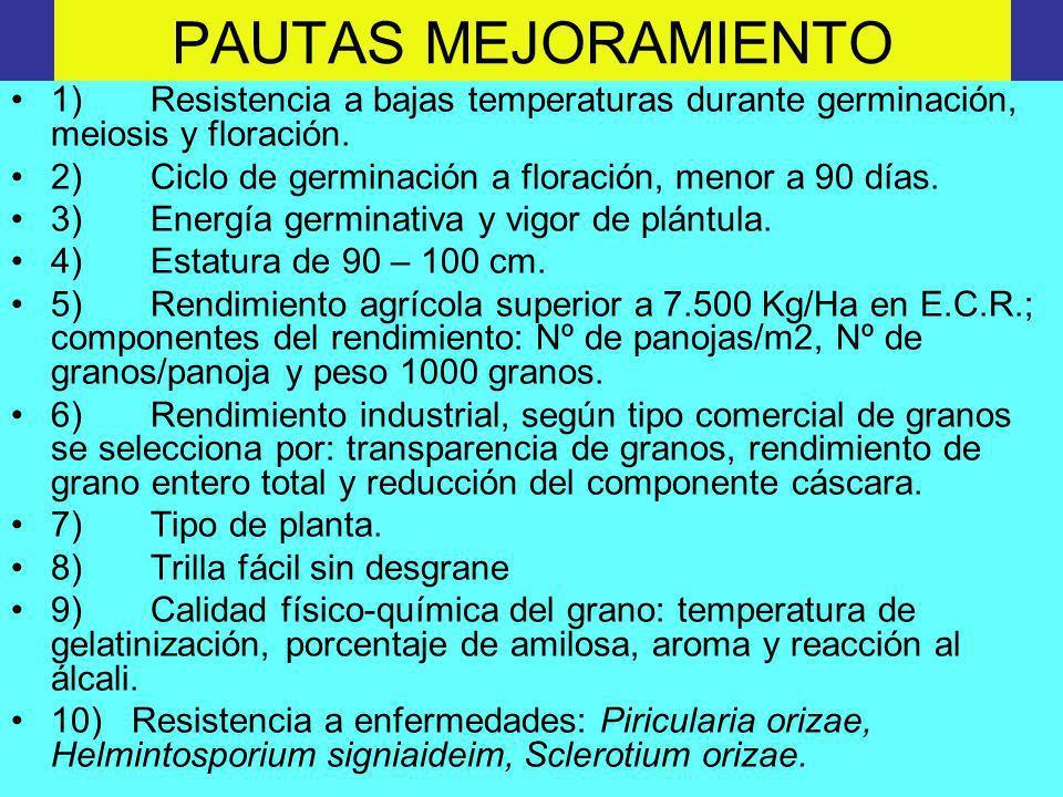 PAUTAS MEJORAMIENTO 1) Resistencia a bajas temperaturas durante germinación, meiosis y floración.