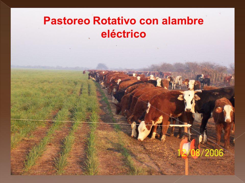 Pastoreo Rotativo con alambre eléctrico