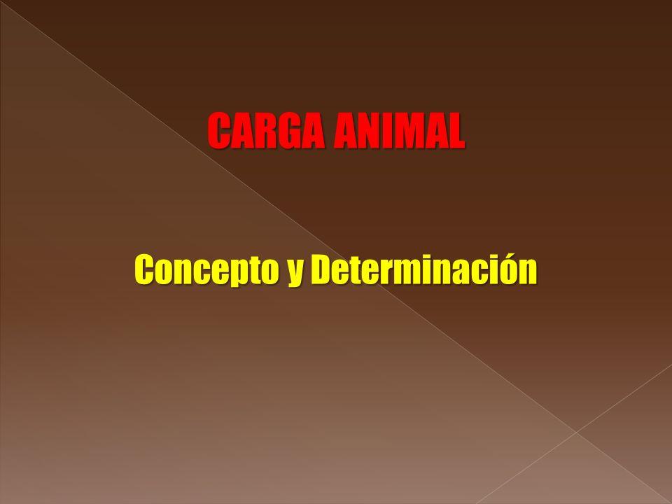 Concepto y Determinación