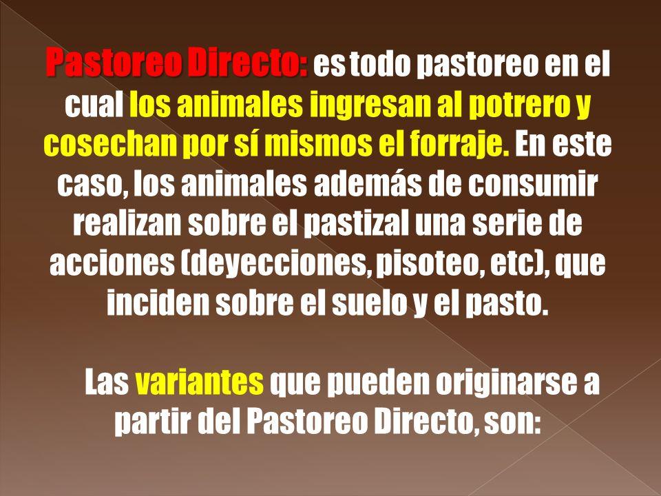 Pastoreo Directo: es todo pastoreo en el cual los animales ingresan al potrero y cosechan por sí mismos el forraje. En este caso, los animales además de consumir realizan sobre el pastizal una serie de acciones (deyecciones, pisoteo, etc), que inciden sobre el suelo y el pasto.