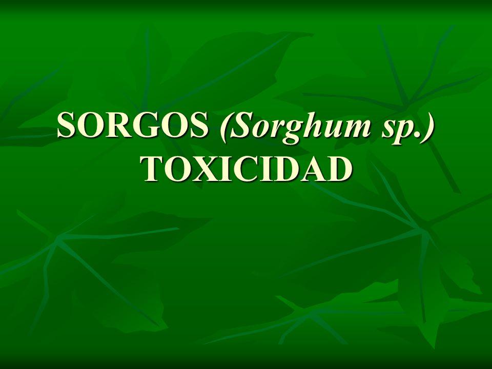 SORGOS (Sorghum sp.) TOXICIDAD