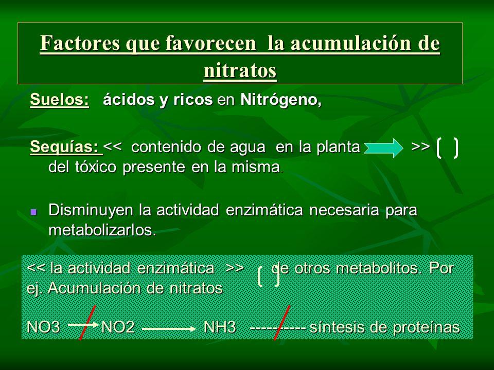 Factores que favorecen la acumulación de nitratos