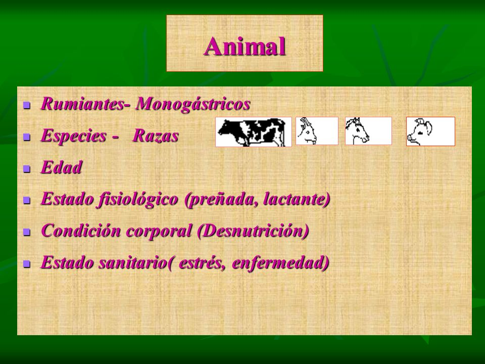 Animal Rumiantes- Monogástricos Especies - Razas Edad