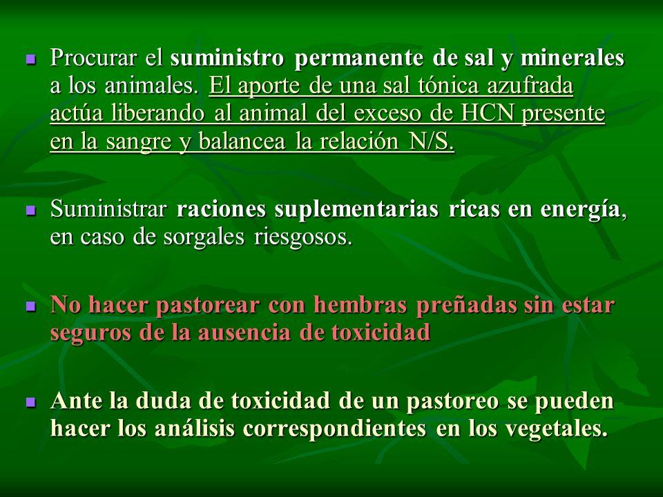 Procurar el suministro permanente de sal y minerales a los animales